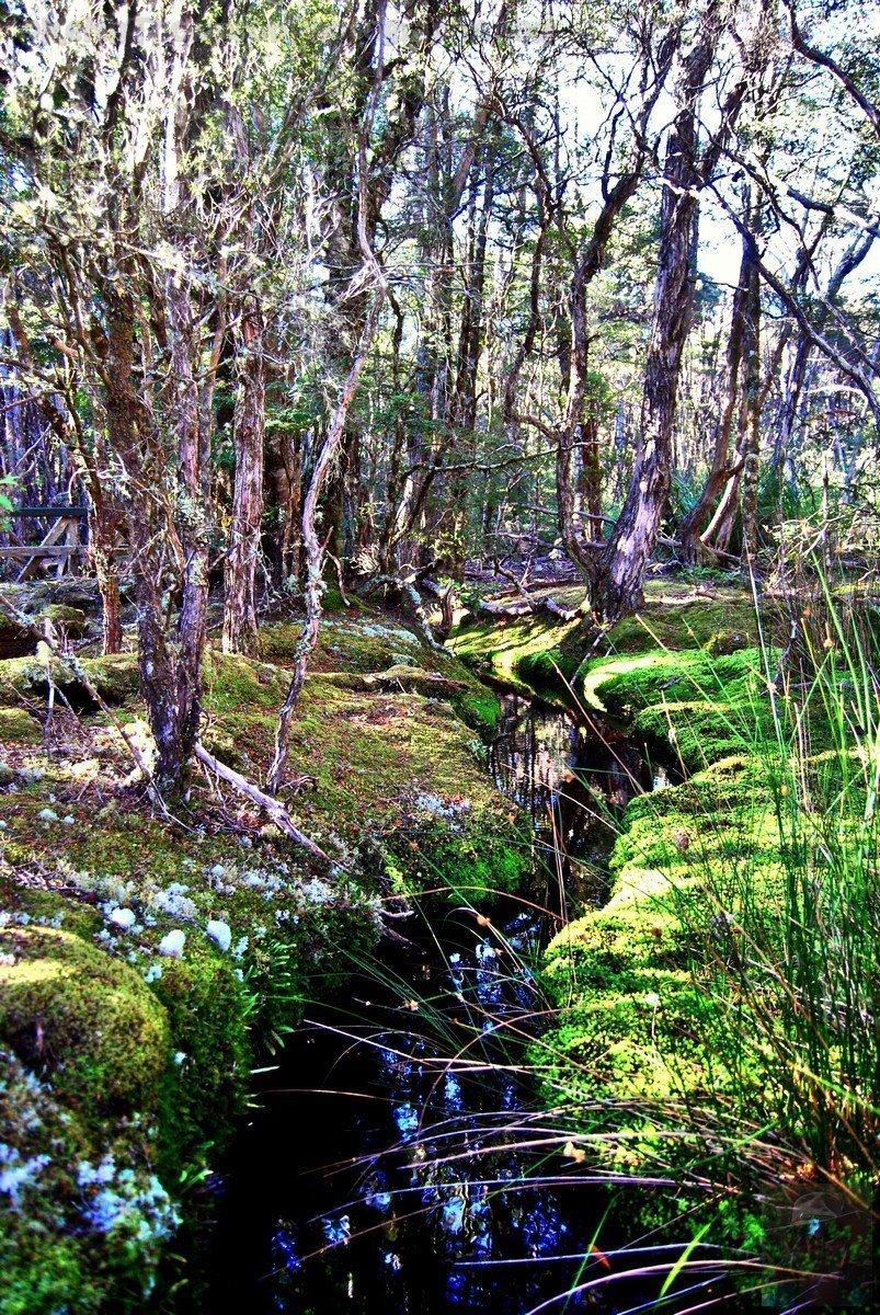 Goblin Forest Walk Blue Tier.015 11h14m11s2019 06 07 JPG