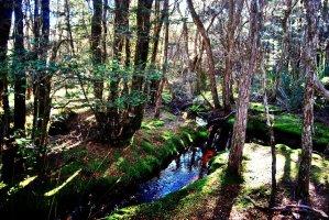 Goblin Forest Walk Blue Tier.020 11h16m48s2019 06 07 JPG