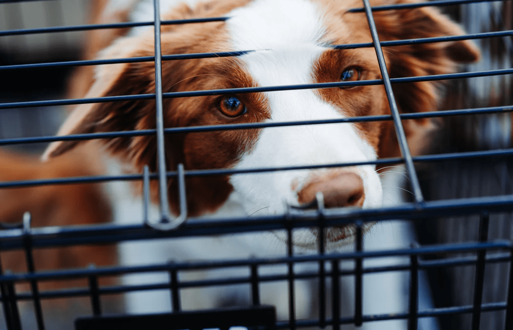 How To Choose The Right Pet Shipping Company