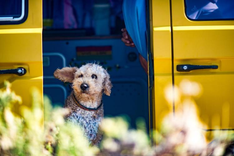 dog looking out a car door