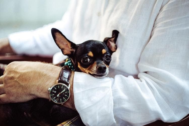 small dog in arm