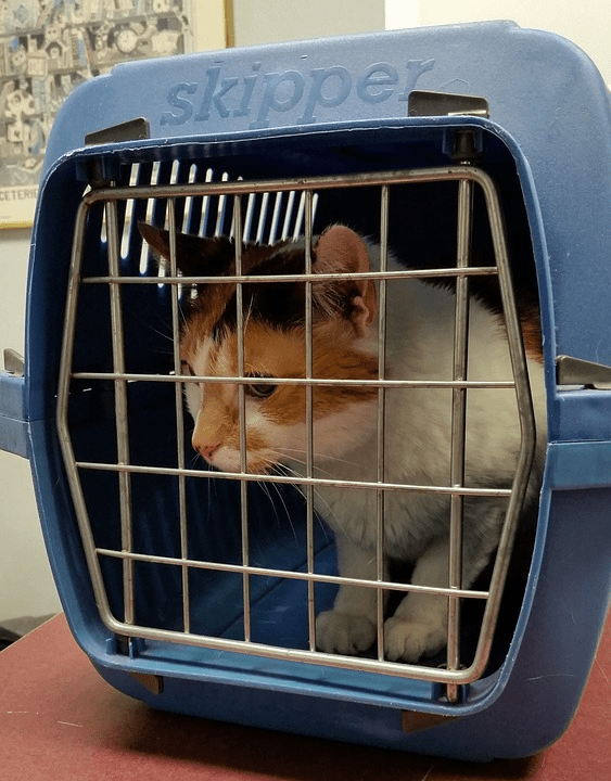 A cat in a hard skipper carrier.