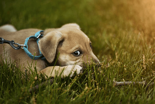 How To Calm Down A Dog When They're Anxious