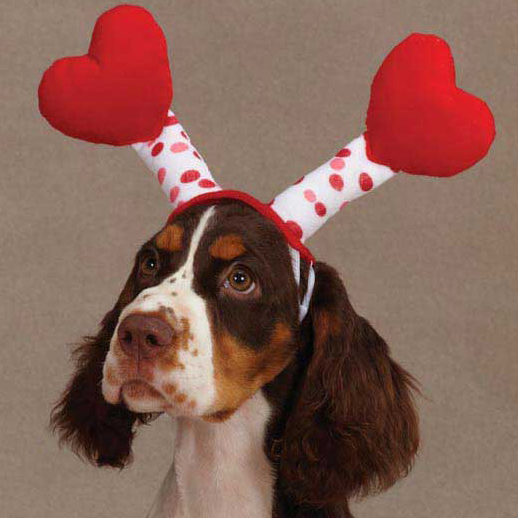 Valentines Day Gifts For Dogs That Show Them You Care