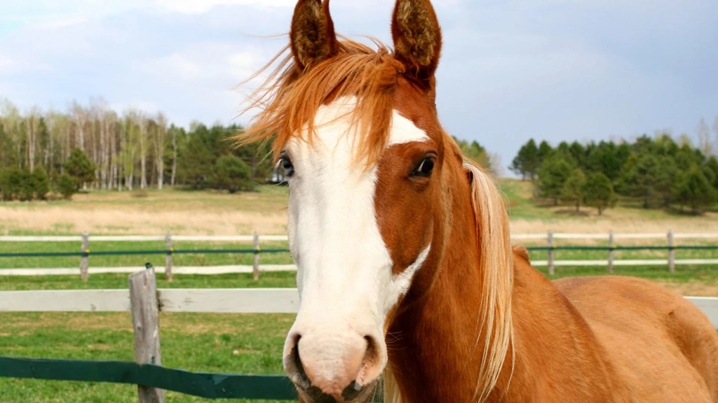 best horses for beginners American quarter horse