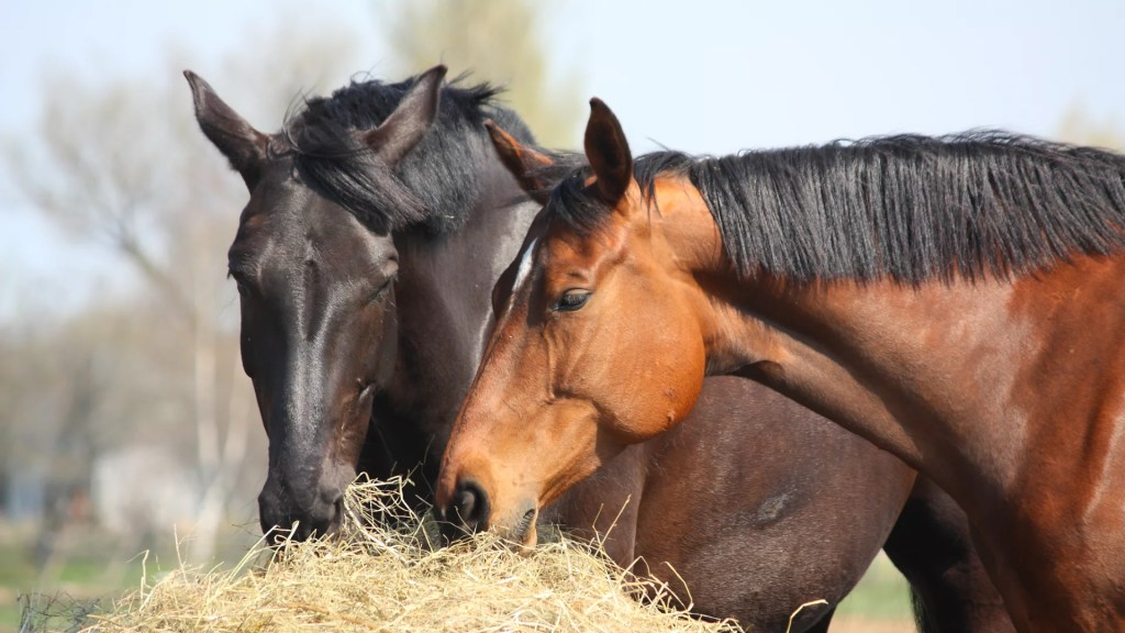 Organic Feed For Horses