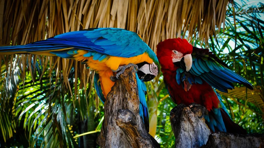 How Much Does A Macaw Cost?