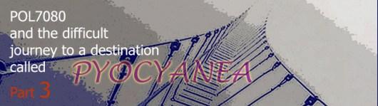 bridge Pyocyanea-P3