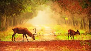 Download file for High Resolution Nature Pictures with A Couple of Deer in Morning