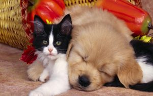 Cute Animals Pictures of Black and White Cat and Dog