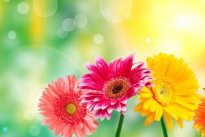 High Resolution Colorful Flower Images for Wallpaper