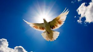 Images of Doves - Flying on Blue Sky