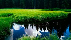 Wallpaper HD nature 1080p with green grass and clean river