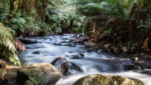 Cement Creek Warburton for 4K Nature Wallpaper