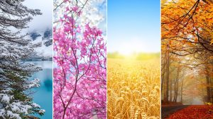 Free Picture of 4 seasons wallpaper in 4K resolution