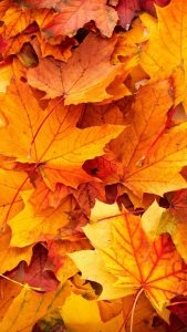best wallpapers for iPhone 6 with high resolution fall pictures