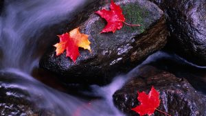 Beautiful Nature Wallpaper Big Size with Fallen Autumn Leaves