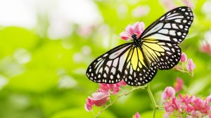 Pictures Of Flowers And Butterflies in HD for Desktop Background