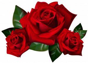 Top 25 Pictures Of Red Roses - #03 - with Transparent Background