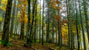 High Resolution Nature Photo with Picture of Autumn Forest