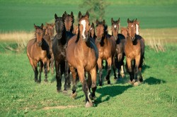 2016 Equine Wellness Plans are Here!