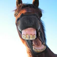 OCTOBER AND NOVEMBER ARE EQUINE DENTAL HEALTH MONTHS!