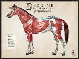 Equine-Acupuncture-Points-Meridians