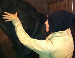 Equine-Sports-Massage-Therapy-Dr-Tranquillo