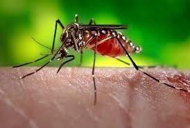 Fall News West Nile Virus Equine