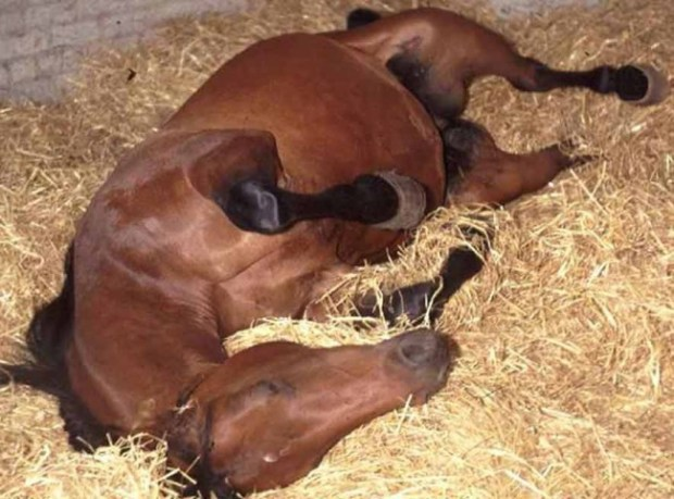 Preventing a Colic as a Horse Owner by Dr. Gina Tranquillo of All Points Equine