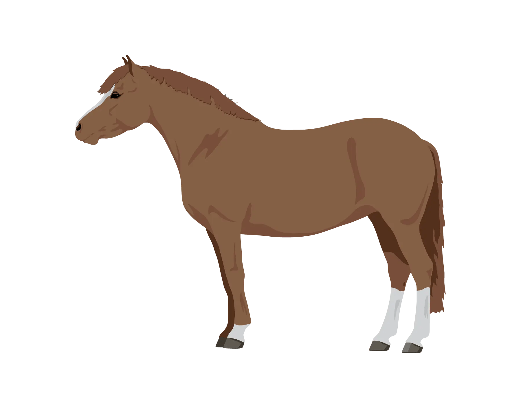 learn about horse pony coat colors play coat colors games