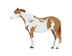 Horse pony quizzes on coat colors markings gaits breeds for kids take the coat colors quiz ccuart Gallery