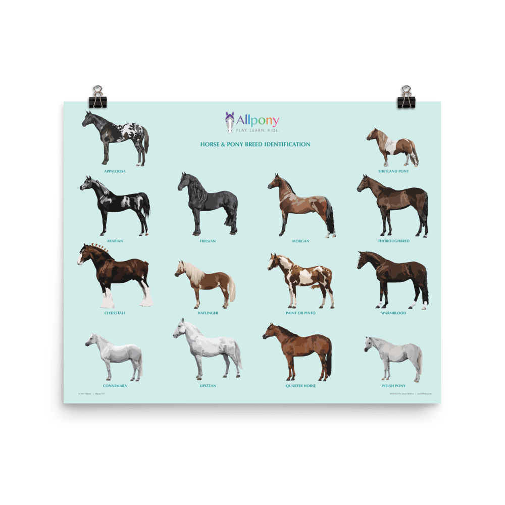 Allpony Horse Breeds Poster