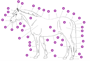 Parts of the horse game