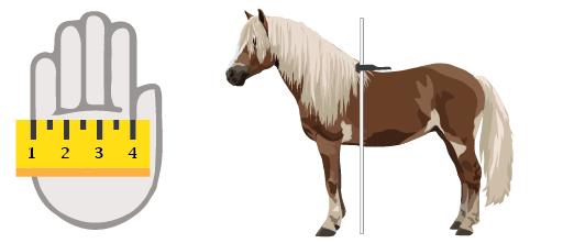 Measure a pony