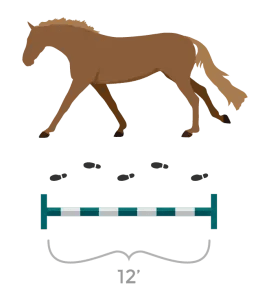 horse stride measure walking steps