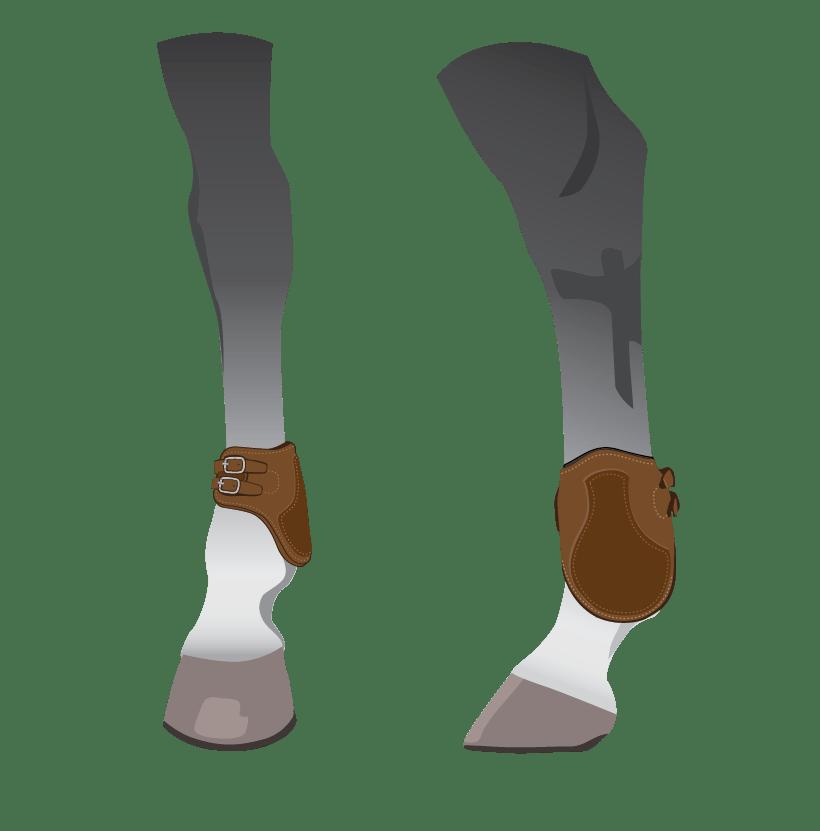 horse hind leg ankle boots illustration