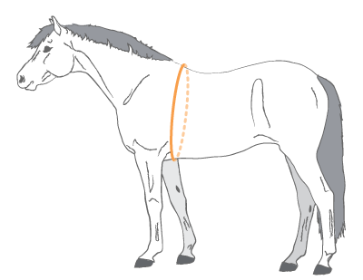 Measure a horses weight