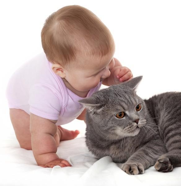 Аллергия на кота у ребенка симптомы
