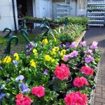 Plant sale and coffee morning