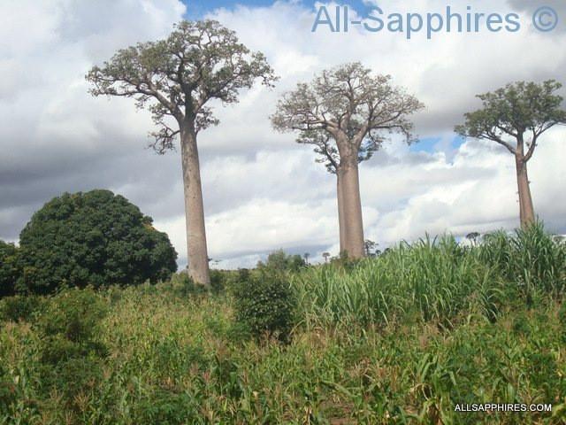 toliara-to-ilakaka-baobab-trees-007