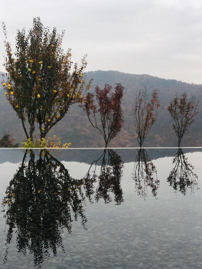 trees reflecting on pool at Museum SAN