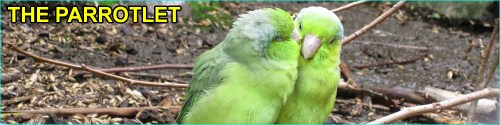 Parrotlet species
