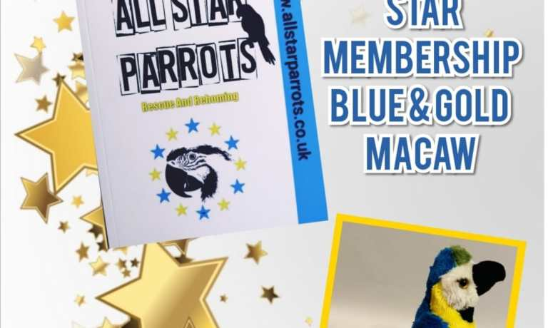 Gold Star Membership Blue & Gold Toy