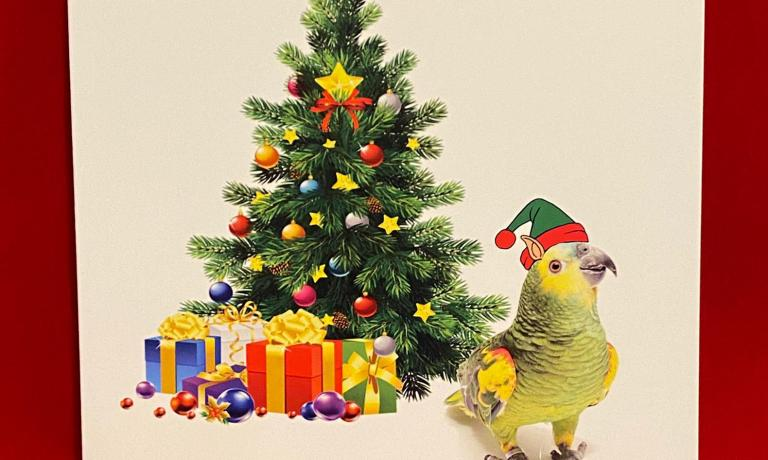 10 pack Amazon Parrot Christmas Card
