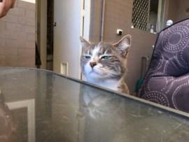 Katze, Weltreise, Housesit, Trustedhousesitter, Alltagsgewusel