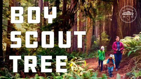 Boy Scout Tree Trail