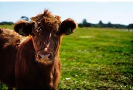 livestock fence installation, livestock fence