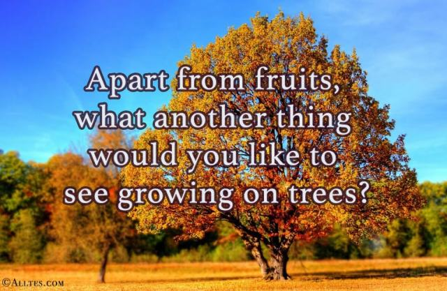 apart from fruits what else on trees