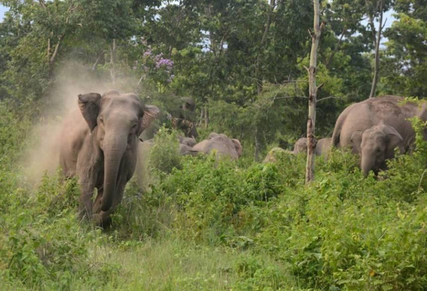La mandria di elefanti calpesta un bracconiere